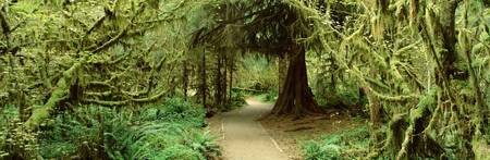 Path Hoh Rain Forest Olympic National Park WA
