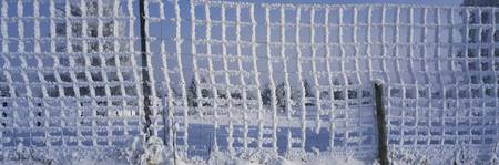 Thick Rime on a Net w/ Snow Canton of Aargau Swit