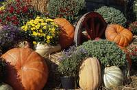 Autumn harvest display with squash