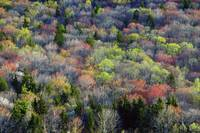 High angle view of Appalachian hardwood forest