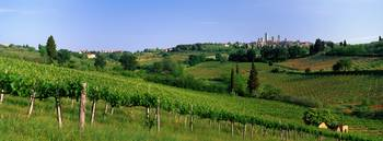 Vineyards and Medieval Town of San Gimignano Tusc