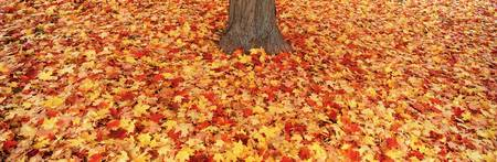 Autumn leaves near a tree trunk