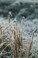 Ice coating on grass