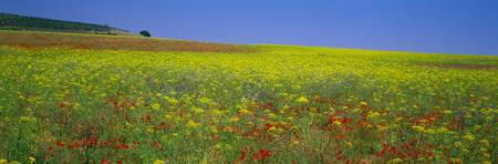 Wildflowers Beja Alentejo Portugal