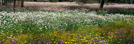 Field of Flowers Kings Park Perth Australia