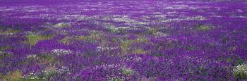 Field of Flowers Planicies Portugal