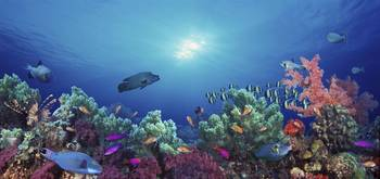 School of fish swimming near a reef