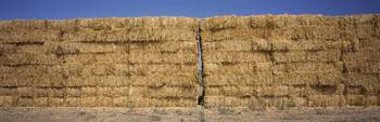 Hay stacks in a field