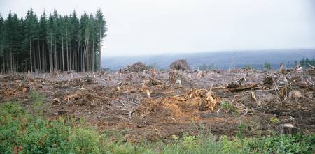 Trees felled on a hillside