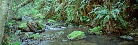Stream flowing through a rainforest