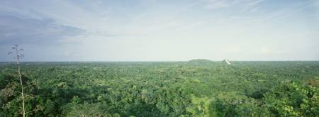 High angle view of a rainforest