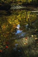 Autumn color trees reflected in stream