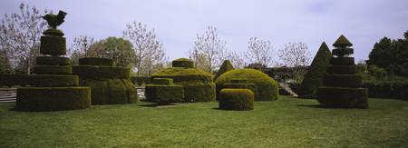 Hedges and topiaries in a garden