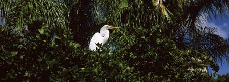 Egret perching on a branch