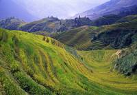 Rice paddy terraces on rolling hills