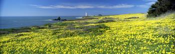 Spring Flowers and Pigeon Point Lighthouse CA