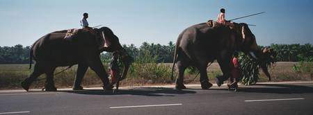 Elephants walking on a road