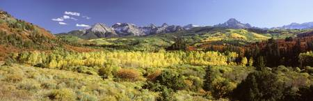Aspen trees on a landscape
