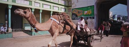 Camel pulling a cart on a street