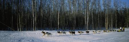 18 huskies begin the long haul of 1049 miles to N