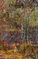 Cattails and autumn color leaves reflected in pon