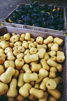 High angle view of bins of harvested butternut an