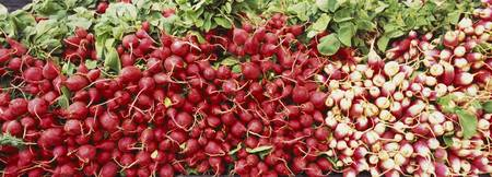 Close-up of radishes and turnips at a market stal