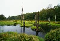 Rain over swamp in hardwood forest