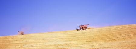Combine harvesters harvesting wheat crop in a fie