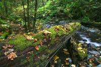 Mossy log over forest stream