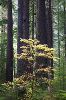 Old-growth rain forest