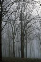 Bare trees in misty forest