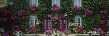 Flowers Breton Home Brittany France