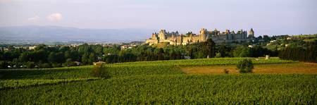 Vineyards in front of a castle
