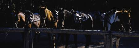 Five horses standing in a row