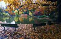 Autumn color trees and fallen leaves along pond