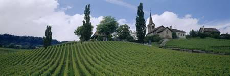 Vineyards Lausanne Switzerland