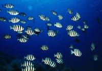 School of fish underwater