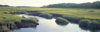 Salt Marsh Cape Cod MA