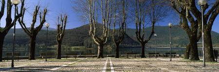 Trees at the lakeside with a mountain range in th