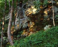 Trees and foliage growing along sandstone cliff