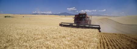 Combine harvesting in a barley field
