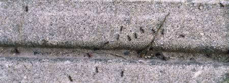 Close-up of ants crawling