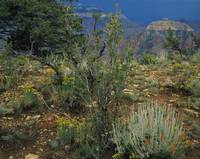 Rabbit brush plants on a landscape