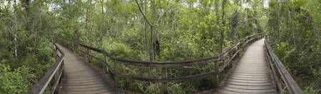 180 degree view of boardwalks in a forest
