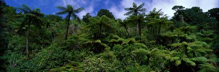 Rain forest Paparoa National Park S Island New Ze