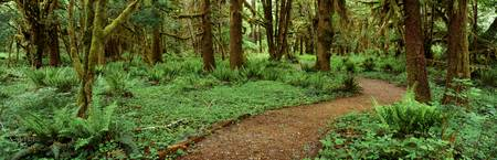 Quinalt Rain Forest Olympic National Park WA