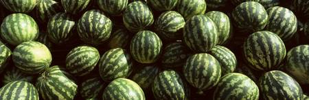 Watermelons Eger Eastern Hungary