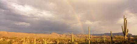 Monsoon Storm Sonoron Desert Rainbow