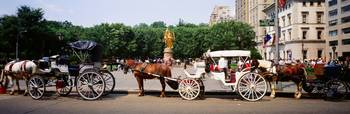 Horse carriages in a city